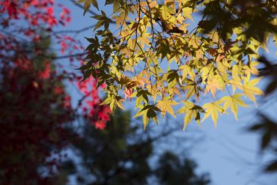 AZUMINO_20141024_03.JPG