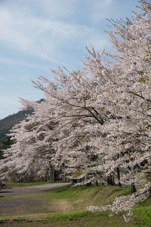 AZUMINO_20150424_07.JPG