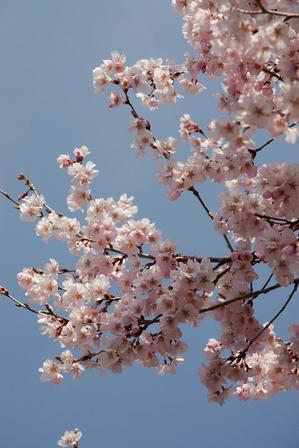 AZUMINO_20080409_0.jpg