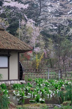 AZUMINO_20080426_3.jpg