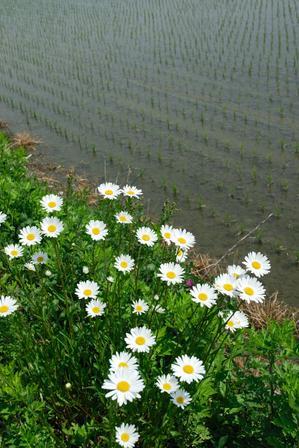 AZUMINO_20080523_2.jpg