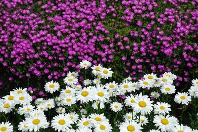 AZUMINO_20080625_2.jpg